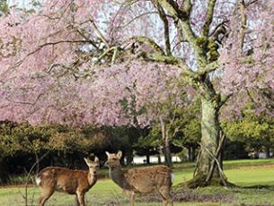 【朝食FREE】想いで奈良 ~春の大人旅行~【選べる朝食、選べる特典付】