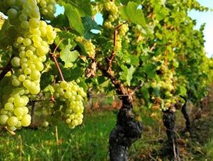 【イベント】ワインセミナー『ワインで巡る世界遺産』 4月6日(金)